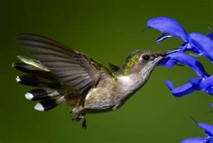 gayle pille gotta love those humingbirds don t give