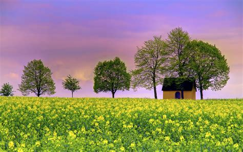 dream spring 2012 spring landscape hd wallpaper 2560 215 1600 dream spring 2012 simply beautiful wallpapers hd