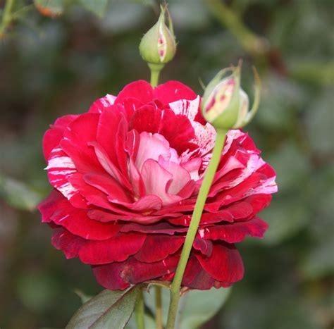 imagenes bellas hermosas y preciosas fotos de flores hermosas y sus nombres