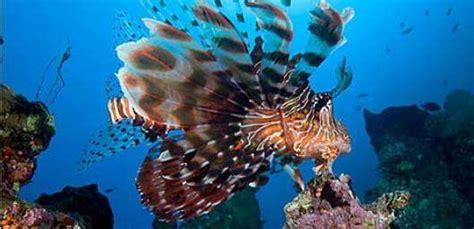 dive in aqaba aqaba diving scuba diving in aqaba arab divers