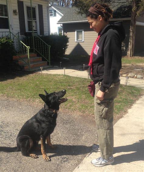 dog agility training classes   guide dog training