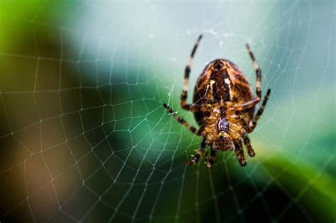 hd insects spiders nature macro closeup zoom image gallery wallpaper