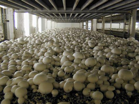 mushroom kit health benefits of mushrooms health benefits of mushrooms