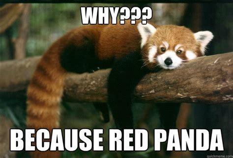 Red Panda Meme - red panda memes quickmeme