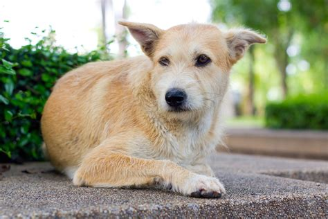adenocarcinoma in dogs liver cancer hepatocellular carcinoma in dogs symptoms causes diagnosis