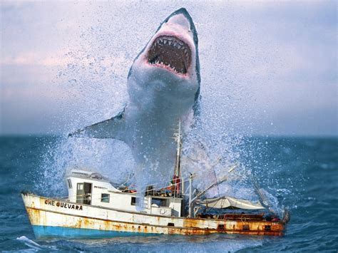 shark in boat a great white shark jumping into a research boat