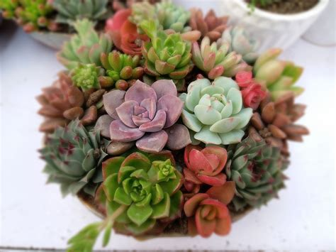 succulents plants 8 tips for succulent care you must know the plant guide