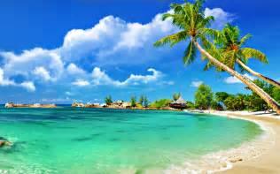 Blinds Sunshine Coast Tropical Palm Beach Wallpaper 2560x1600 Imagebank Biz