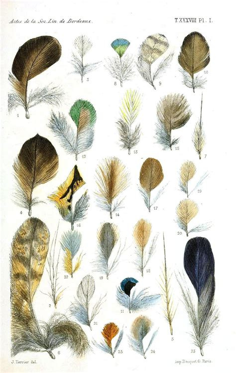 patterns and nature asu feathers of birds with names www imgkid com the image