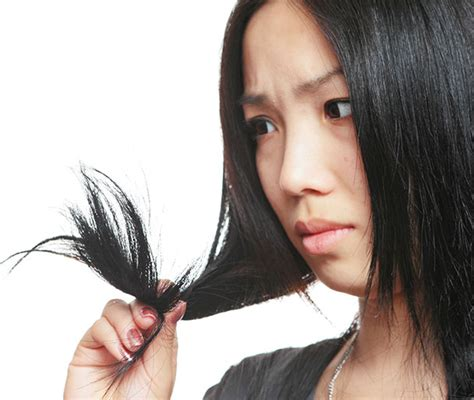 sollutions to dry limp hair world trichology society