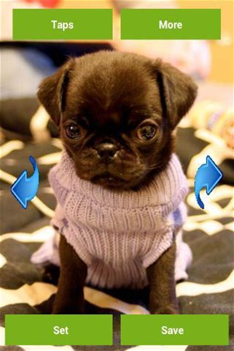 really pugs pugs wallpapers android apps on play