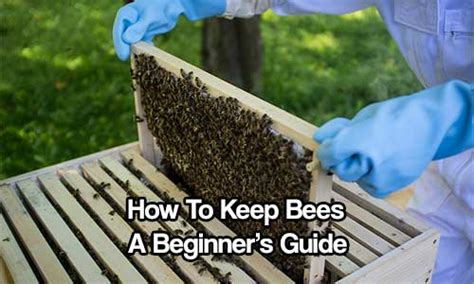 how to keep bees a beginner s guide shtf prepping central