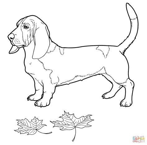 basset hound coloring page free printable coloring pages