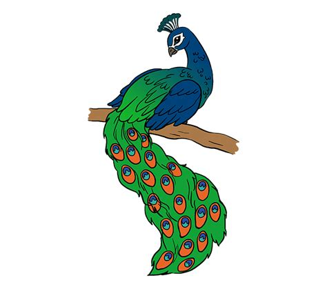 simple colorful peacock drawing free download best