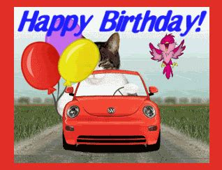 cat cats happy birthday car drive drives driving sports