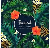 Fondo Tropical De Palmeras Y Flores  Descargar Vectores