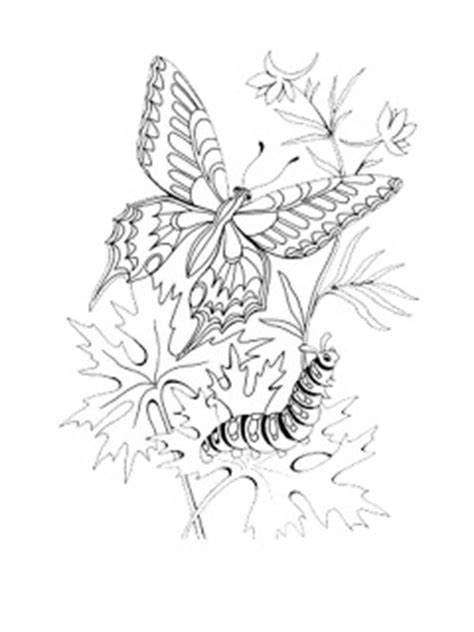 coloring page caterpillar to butterfly caterpillar butterfly coloring pages butterfly coloring