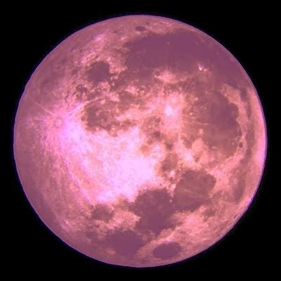 what is a pink moon 25 best ideas about pink moon on pinterest nick drake
