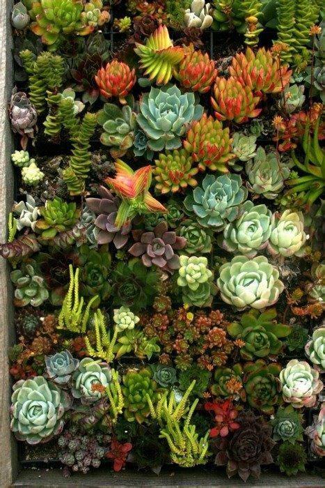 Beau Creation Mur Vegetal Interieur #4: c4e3d3f27ad79b40cf83e1cd223aacb3.jpg