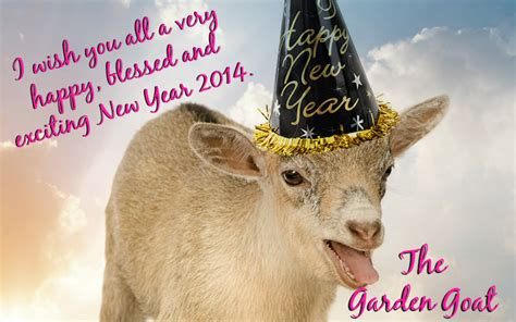 new year animals goat happy new year 2014 resolutions only one