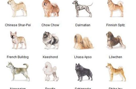 a to z finding a pet for me books list all breeds az breeds picture