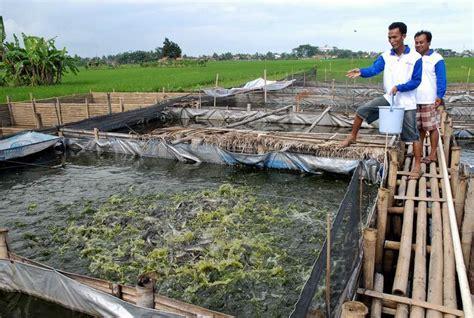 Pakan Ikan Lele Berdasarkan Usia 301 moved permanently