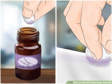 does lavender kill bed bugs how to get rid of bed bugs naturally 13 steps with pictures