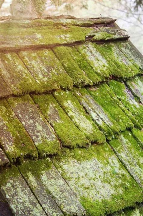 moss covered wooden shingles dollhouse renovation