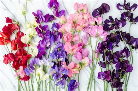 Raised Garden Flower Beds - another sweet pea seeds giveaway