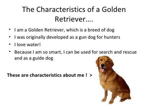 characteristics of golden retrievers characteristics of golden retrievers other