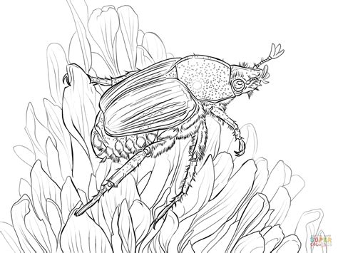 japanese beetle coloring page japanese beetle sits on flower coloring page free
