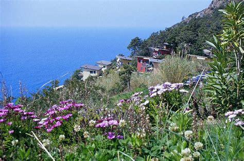 panorama fiori telefono villaggio turistico cinque terre