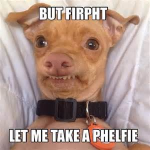 Selfie Meme Funny - top 40 funny animal picture quotes quotes words sayings