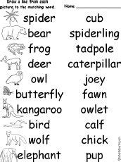 Spellings Baby Farm by 17 Best Images About Animal Baby Matching On