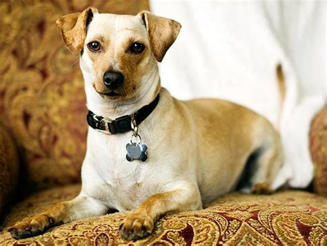 puppy s at home tips tips for the 30 days of adoption pets noah ark and adoption