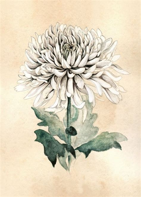 blooming flower tattoo designs chrysanthemum drawing www pixshark images