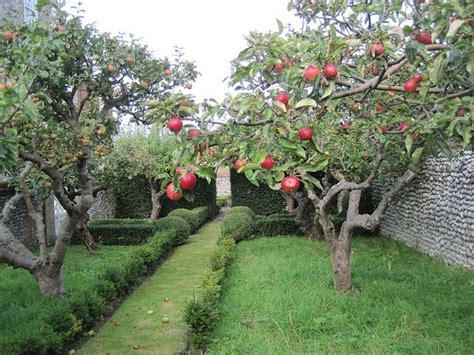 backyard apple orchard 17 best images about fruits on pinterest cherries plum