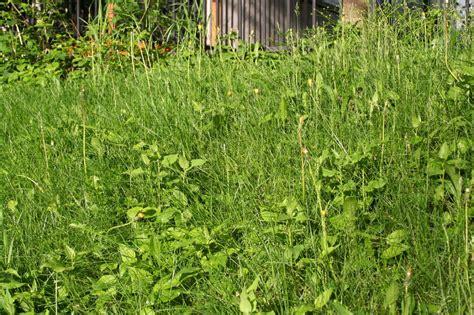 soil types  weeds     soil
