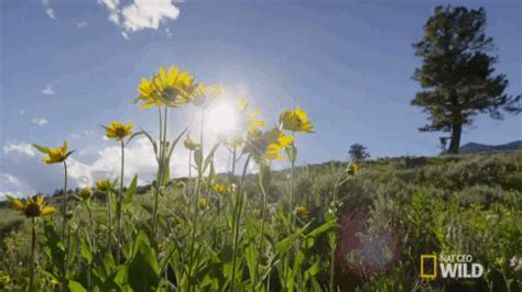 flowers spring gif by nat geo wild find & share on giphy