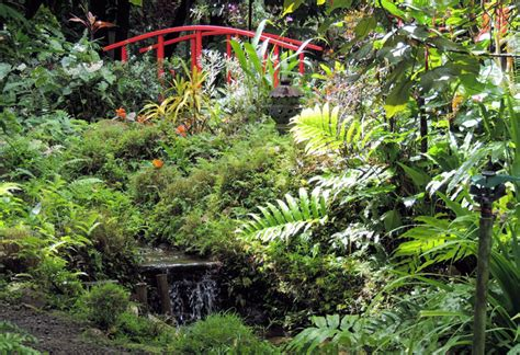 St Lucia Botanical Gardens Don T Miss Places In Lucia Travelmagma Shown In 2444208 Blogs