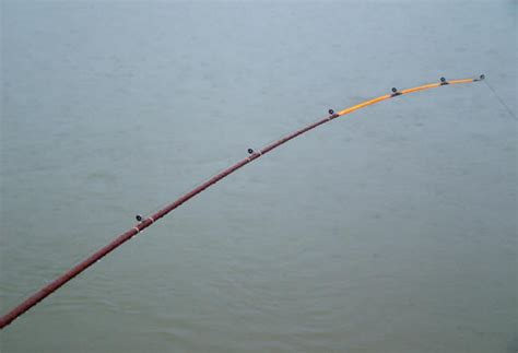 old boat registration lookup fish rod identification selection saltpatrol