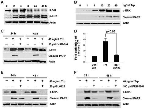 Role of oxidative stress, endoplasmic reticulum stress and