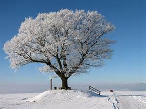 Winter Tree by What Happens During Winter Season At Lightning Landscape