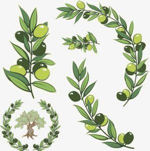 olive branch tattoo meaning olive branch meaning logic
