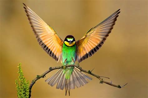 images of beautiful things most beautiful things in the world most beautiful bird in