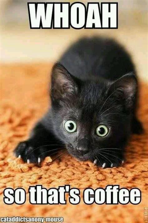 Funniest Cat Memes - best 25 funny cat memes ideas on pinterest cat memes