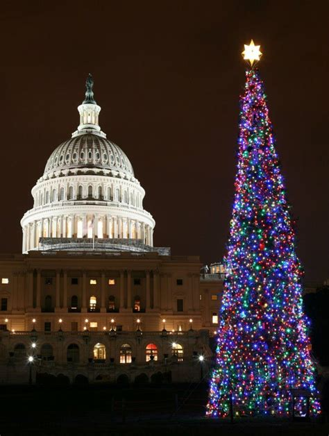 national christmas tree washington dc neat stuff