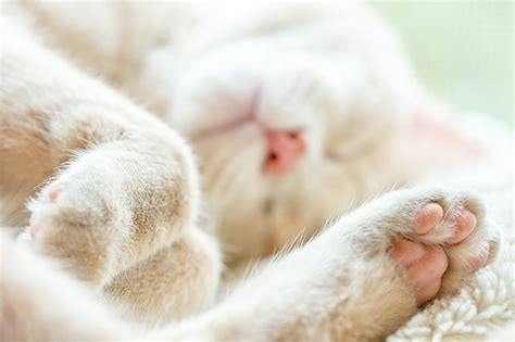 5 ways to keep your outdoor cat s paws safe from hot pavement cattime