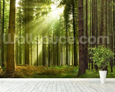 panoramic wall murals panoramic woodland wall mural panoramic woodland