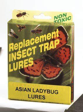 asian ladybug trap lure | home & garden